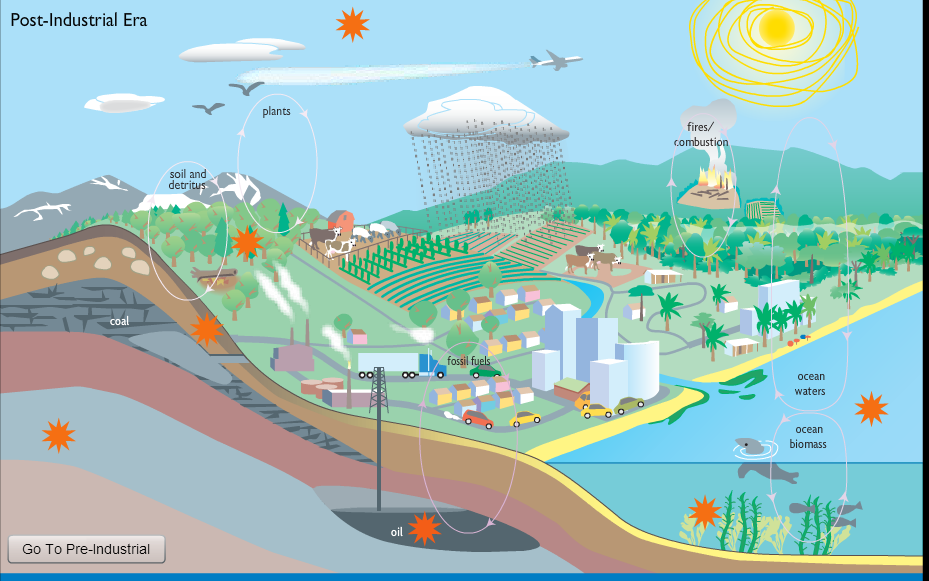 Carbon Cycle - ICT Portfolio